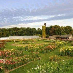 Jardins du château de La Bourdaisière : les dahlias