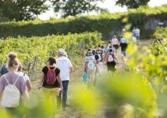 « Vignes, Vins, Randos » 2018