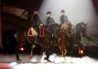 Les chevaux sont lâchés !
