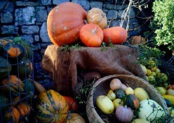 Roulez jusqu'à la fête de l'automne à Terra Botanica !