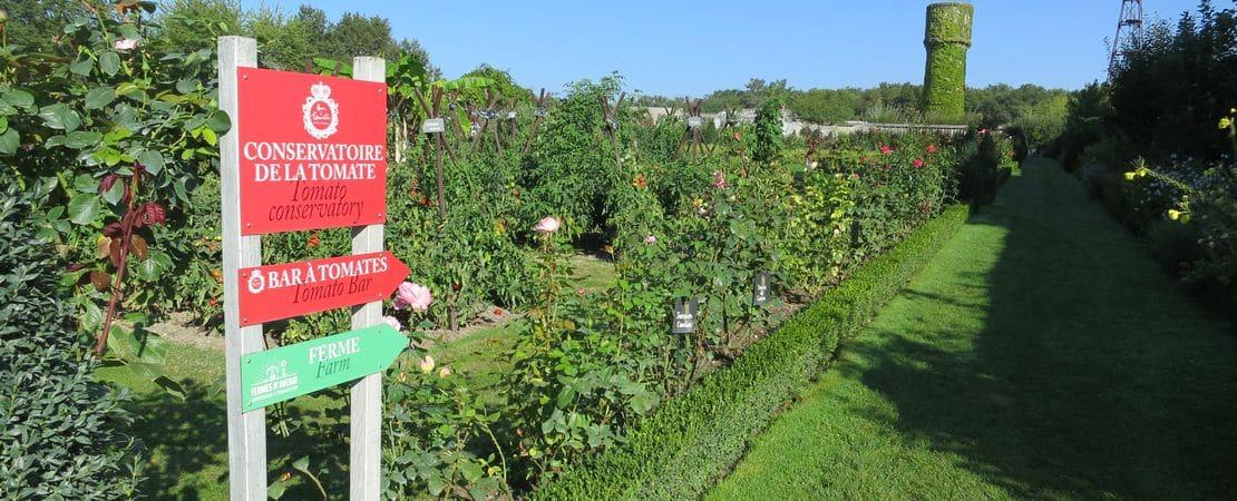 Photo du jardin de tomates du château